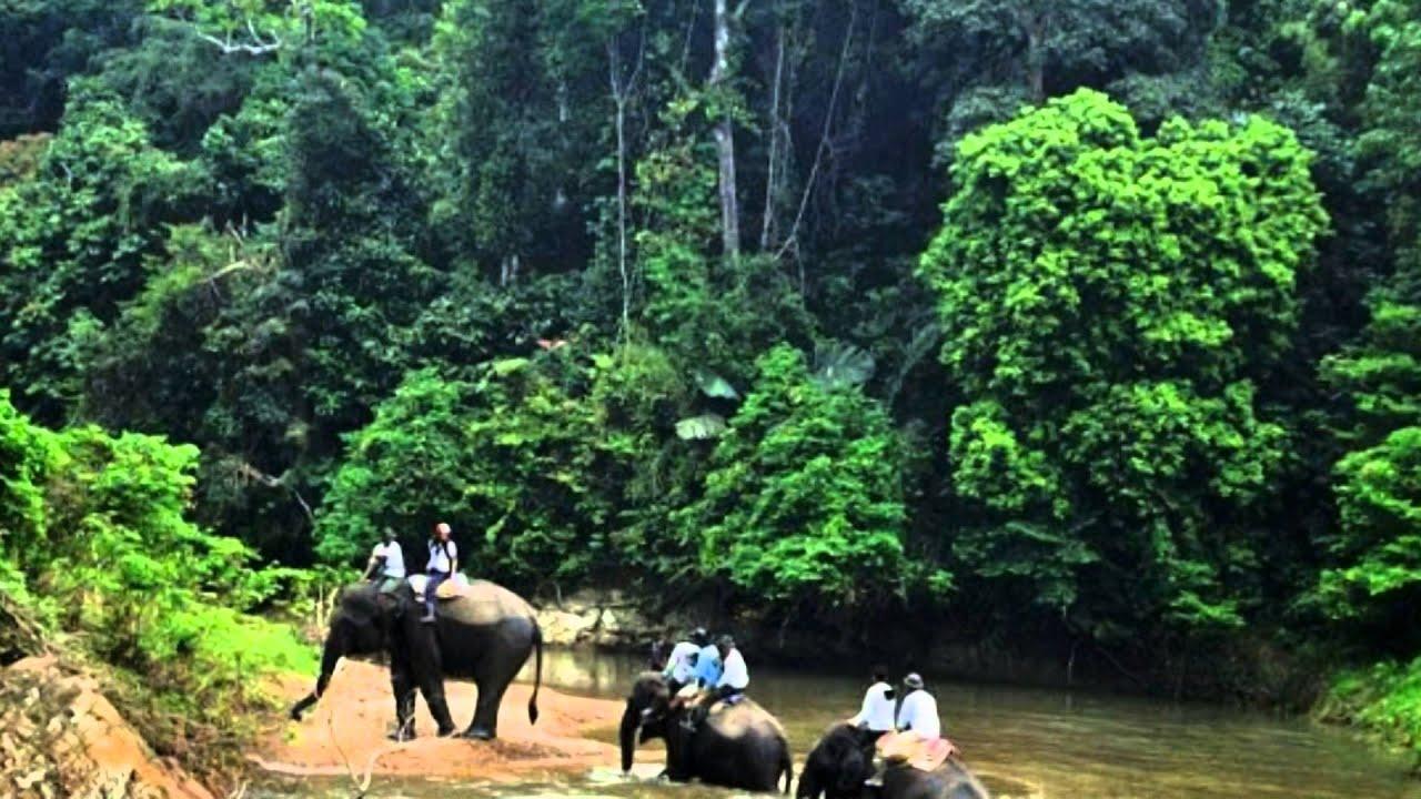 Indonesia trip : Bukit Barisan National Park--Protecting ...