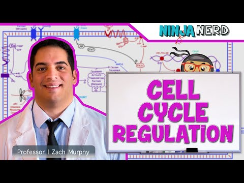 Molecular Biology | Cell Cycle Regulation