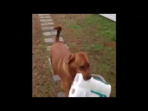 Dog helps bring in the Groceries