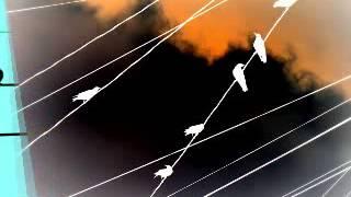 Bay đi cánh chim biển (Nhạc: Đức Huy, Ca sĩ: Ý Lan)