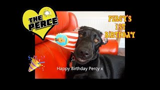 Puppy Labrador 'Percy' from birth to 1st Birthday - really cute.