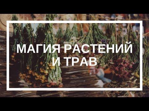 Дарья Ким. Магия растений и трав