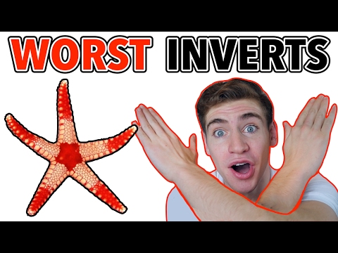 5 Inverts Beginners Should AVOID!