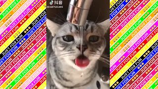 TRY NOT To LAUGH Challenge Cute Funny Animal Fails Compilation 2019 #1
