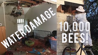 Flipping a House with 10,000 Bees Inside *crazy*