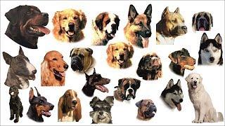 KUP.AZ.PL Tabliczki z psami 190 wzorów różne rozmiary na Twoją bramę Mp3