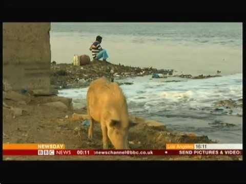 Cleaning India's rivers & surprise dolphins - BBC News - 13th May 2016