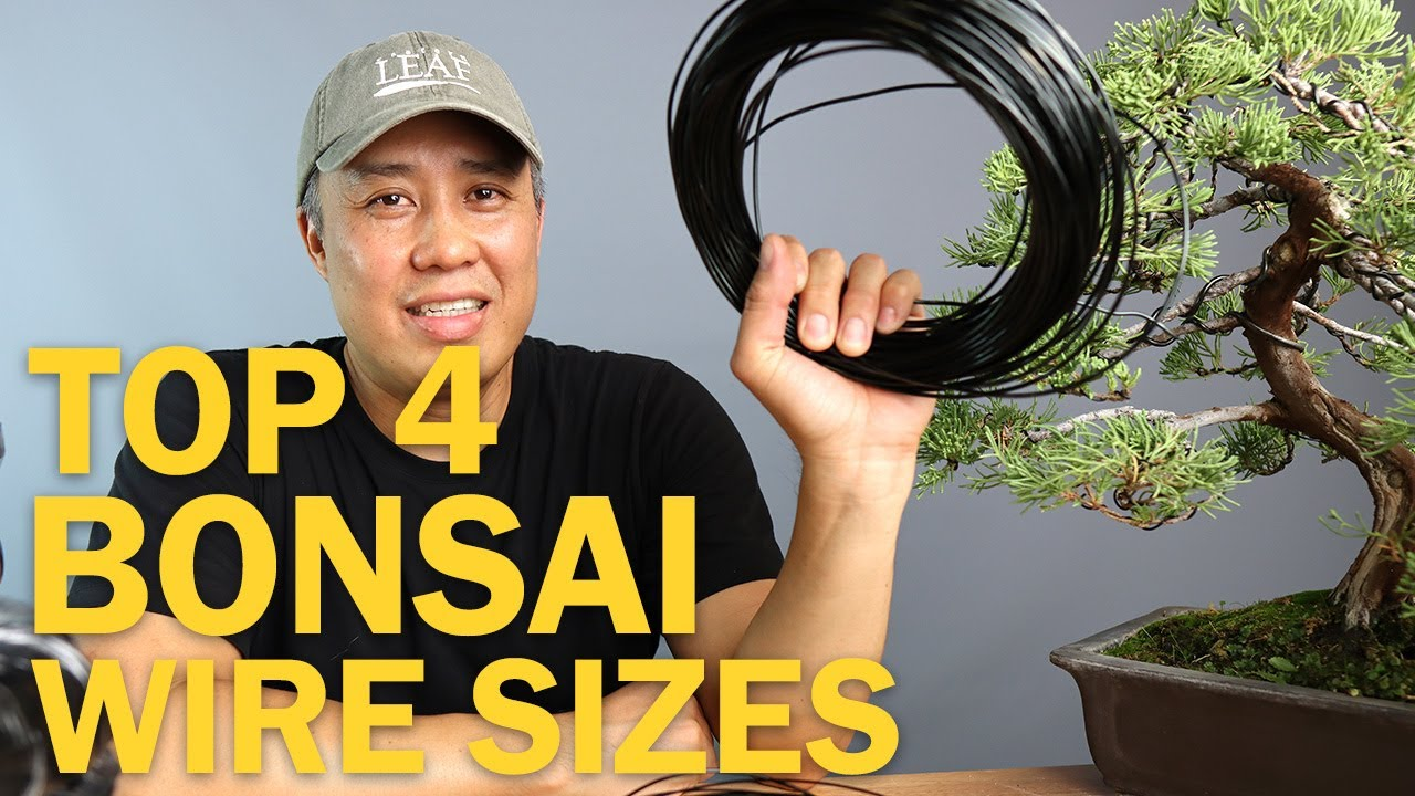 Top Four Bonsai Wire Sizes For Wiring A Bonsai Tree Youtube