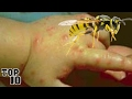 top 10 insects you dont want to get stung by