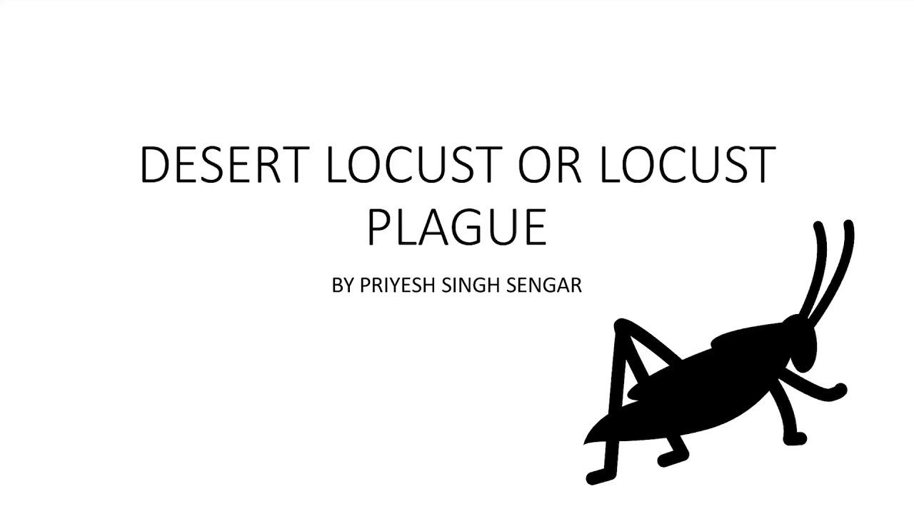 Locust attacks or locust plague - YouTube