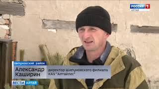 Из каких районов Алтайского края в Барнаул везут новогодние ёлки?
