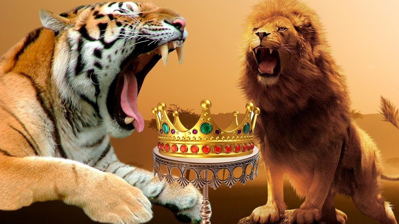 Download Why isn't TIGER the KING OF THE JUNGLE? - LION VS TIGER