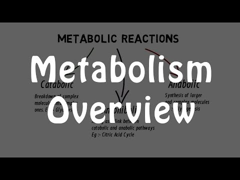 Overview Of Metabolism | Easiest Explanation |