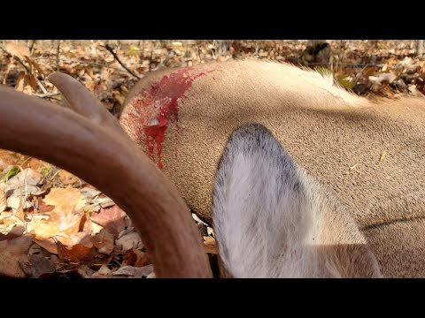 Deer Hunting 2019 - West Virginia Public Land Buck Shot On Film