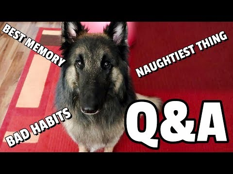 Q&A with My Belgian Shepherd Dog