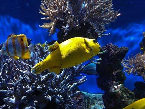 Aquarium du Musée Océanographique de Monaco - Oceanographic Museum of Monaco
