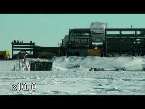 Polar bears briefly halt Alaska oil construction project