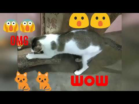 CAT IS SCRATCHING/PLAYING WITH WOOD/FUNNY CATS VIDEOS