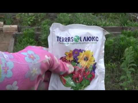 Аир болотный применение, лечение, свойства, рецепты