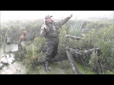 Охота на утку видео, смотреть бесплатно | Белохота