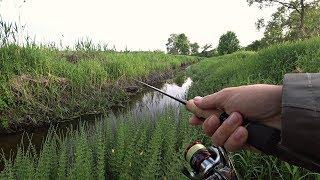 Сколько же Рыбы в этом РУЧЬЕ?! Рыбалка на спиннинг.