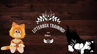 How To Litter Box Train A Kitten!