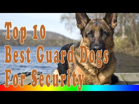 Guard Dogs - Top 10 Best Guard Dogs For Security