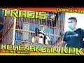 Tragis Aksi Kemenangan Kacer Kpk Durasi Poll Juara  Milik Ade Hidayat  Mp3 - Mp4 Download