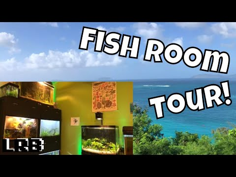 I FOUND A FISH ROOM On An ISLAND - Tropical Fish On A Tropical Island!