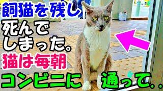 飼猫を残して死んでしまった私。猫は毎朝コンビニに通って..【猫の不思議な話】【朗読】