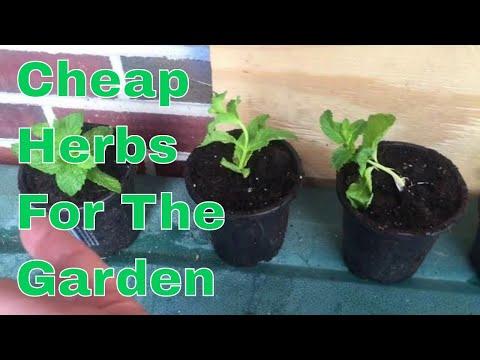 Gardening hack, how to get free herbs
