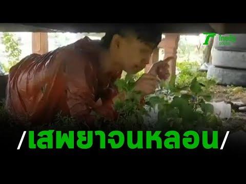 หนุ่มเสพยาหลอน หวั่นคนตามไล่ยิง | 19-08-62 | ข่าวเที่ยงไทยรัฐ