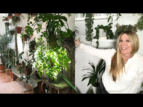 STYLE YOUR SPACE!:  MY TOP 10 MUST-HAVE HOUSEPLANTS