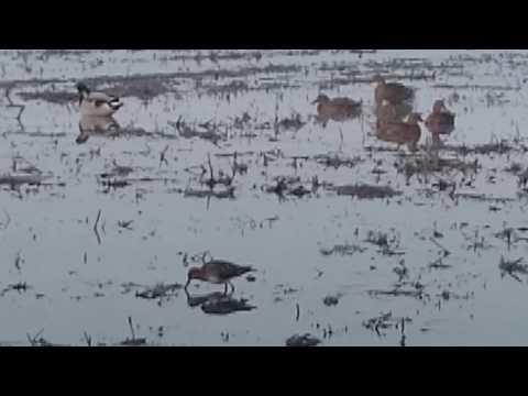 Avcılıkta Güme Neden Kullanılır.