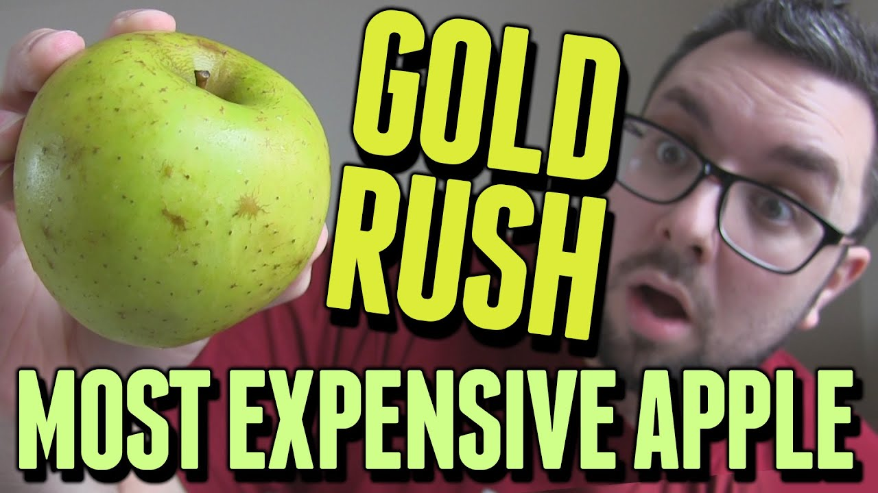 MOST EXPENSIVE APPLE EVER (Gold Rush Review)