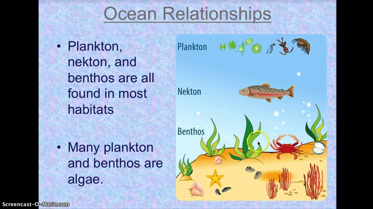 Ocean Habitats For Kid...