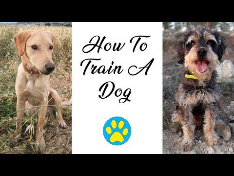 How I Train My Dogs And Teach Them Tricks