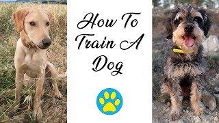 How I Train My Dogs And Teach Them Tricks
