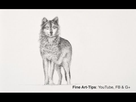 How to Draw a Wolf With Pencil - Narrated, the easy way