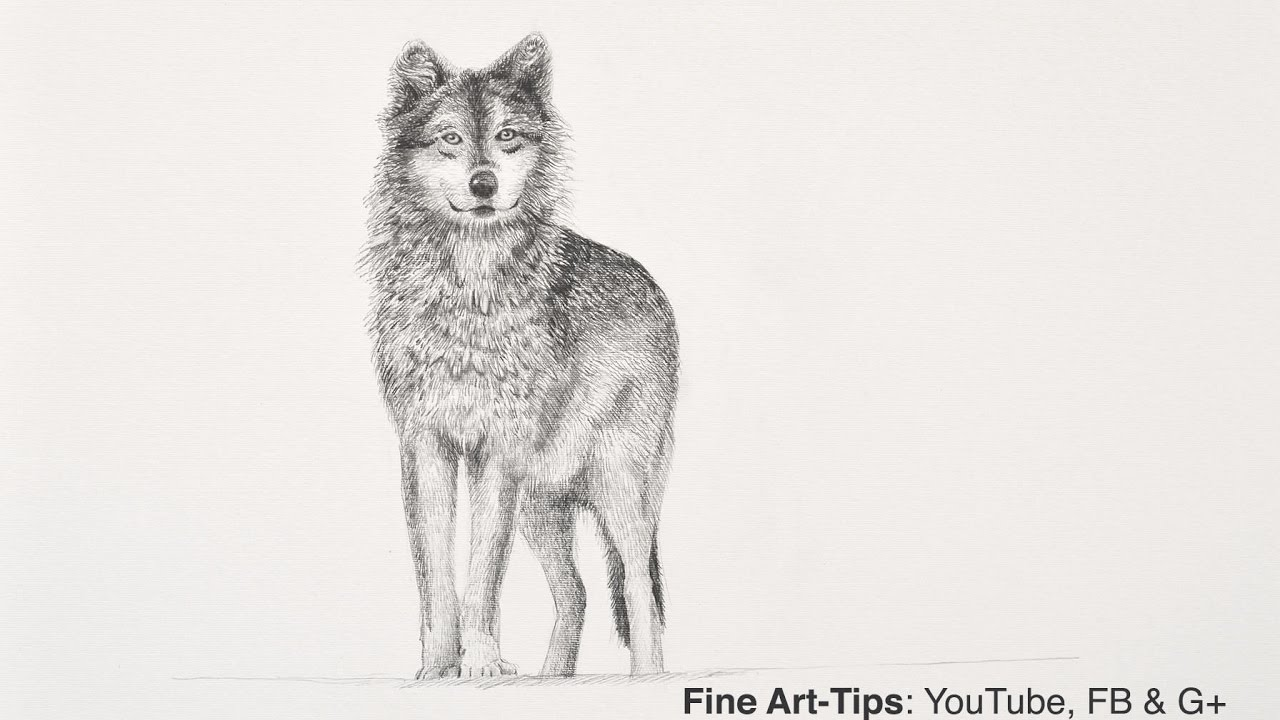 How to draw a wolf with pencil narrated the easy way youtube