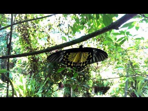 Kuala Lumpur - Butterfly Park