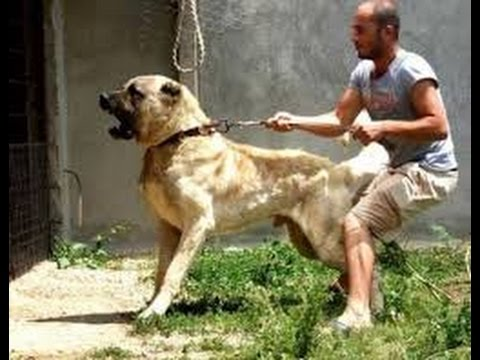 dog-attacks-a-man-for-kicking-its-friend!!!