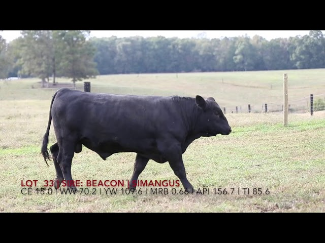 Edgewood Angus Lot 33