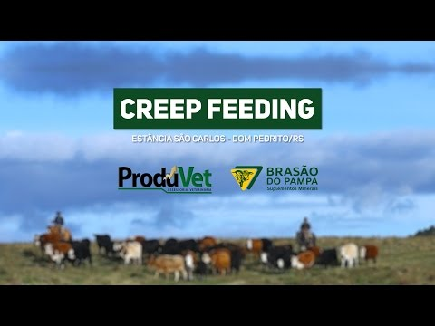 PRODUVET - No campo, ao lado do Produtor  -  Creep Feeding