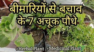 क्या आप जानते हैं घर में कौन-सा पौधा लगाने से बीमारियों से छुटकारा पाया जा सकता है ? #Herbal Plant