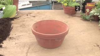 How To Pot Indoor House Plants