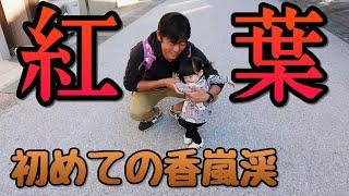 【1歳0ヶ月】初めての紅葉🍁香嵐渓 thumbnail