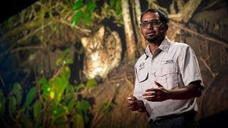 The link between fishing cats and mangrove forest conservation | Ashwin Naidu
