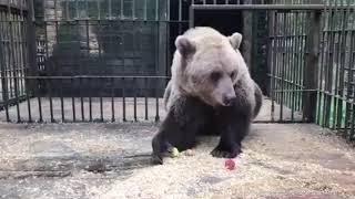Власти Москвы рассказали о животных попадающих в центр реабилитации