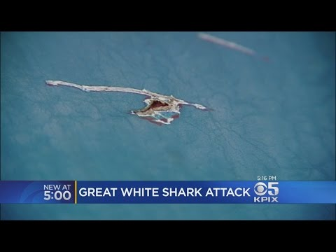 Great White Shark Attacks Fishing Boat Off Santa Cruz Coast